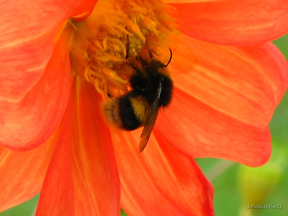 Bumble Bee by Jessica King