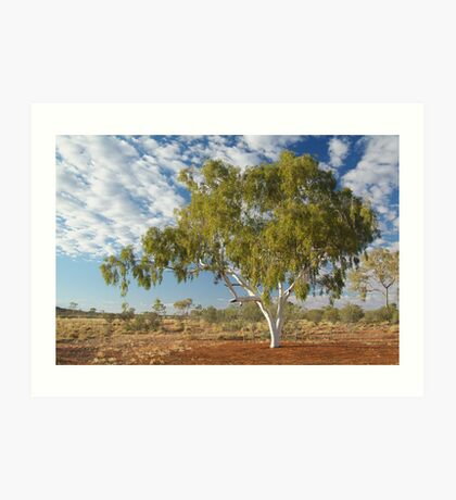 Ghost Gum,Batton Hill North Simpson Desert Art Print