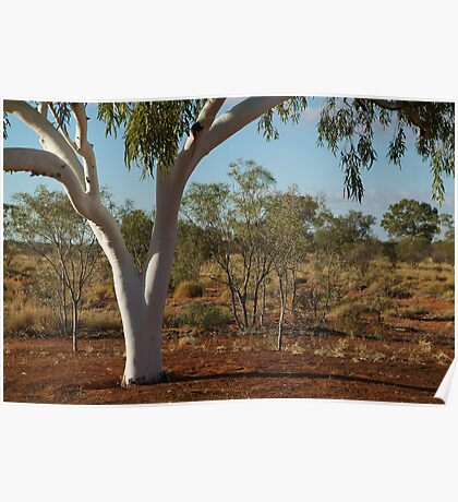 Ghost Gum,Outback Australia,N.T. Poster