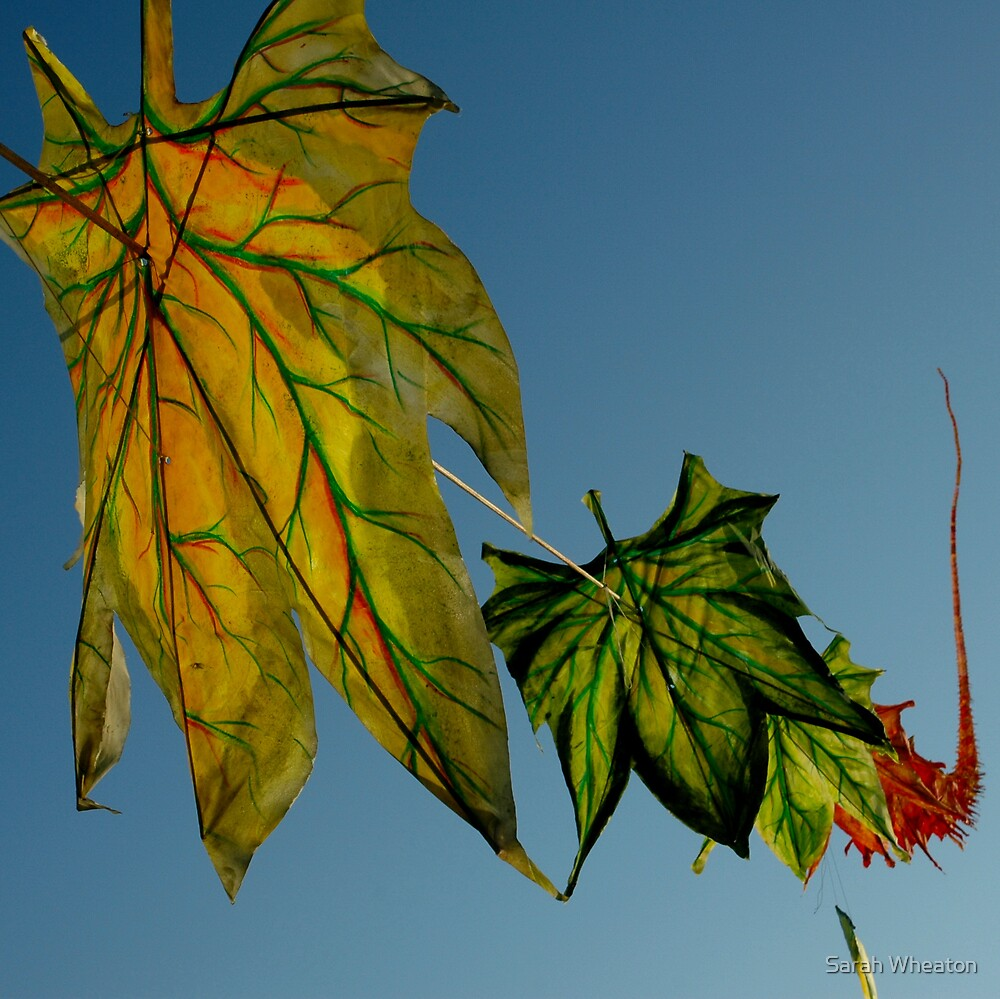 fall by Sarah Wheaton