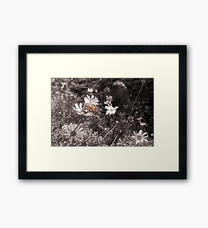 Better Bee Happy Framed Print