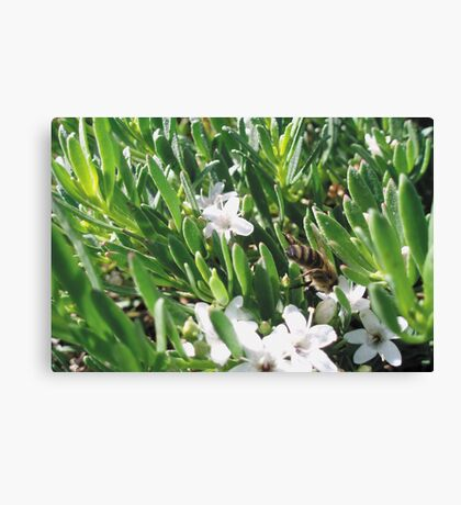 Diving into Work Canvas Print