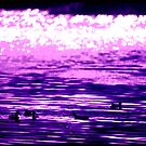 ducks by Marina Hurley