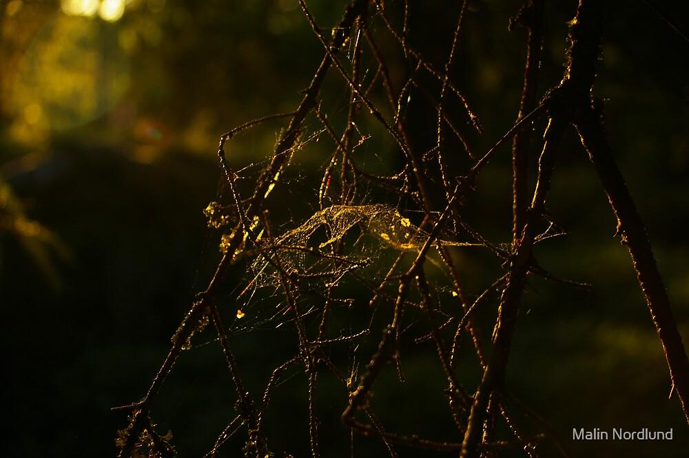 Cob web by Malin Nordlund