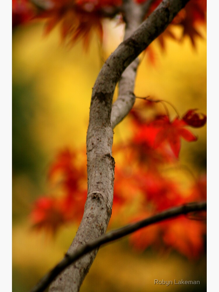 Autumnal colours by Rivergirl