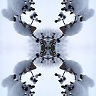 Snow Bow #1 by John Hill-Daniel