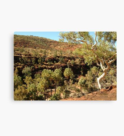 Palm Valley, West Mcdonell Ranges,NT Canvas Print