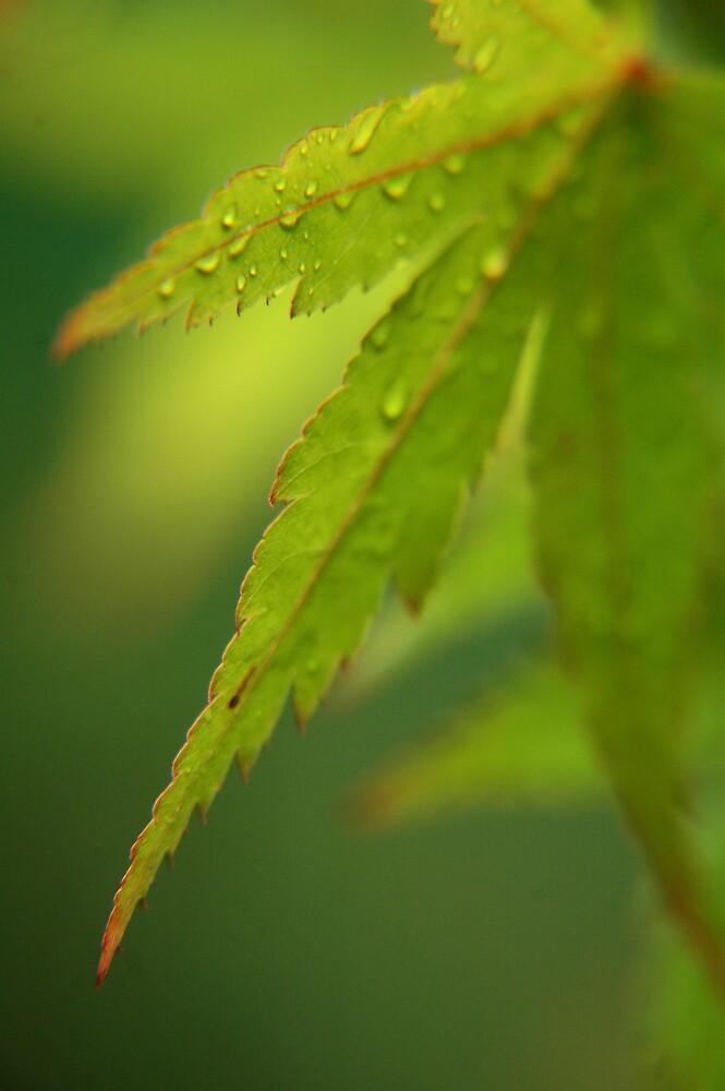 Autumn Leaf by Sue Wickham