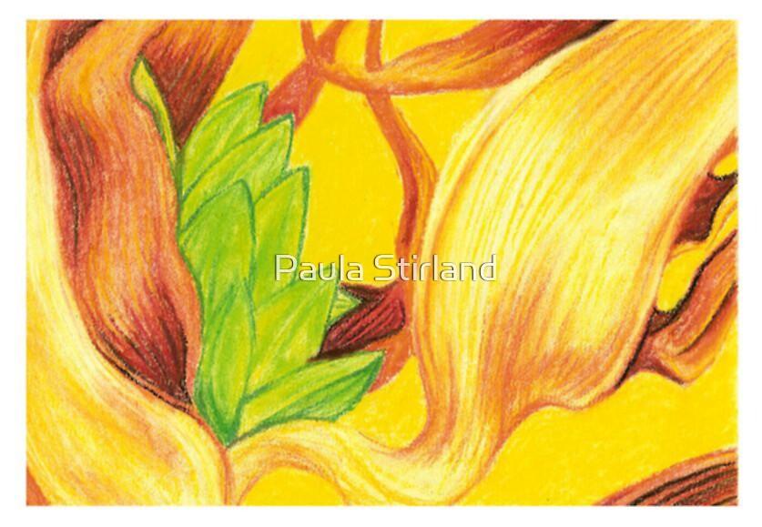 Palm seeds by Paula Stirland