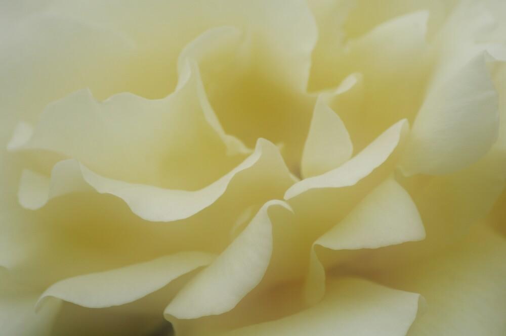 Rose Petals by Sue Wickham