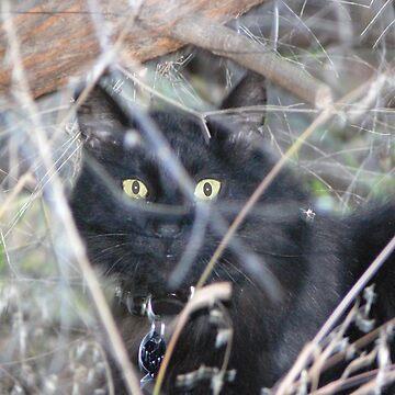 'Jungle' Cat by Sandra