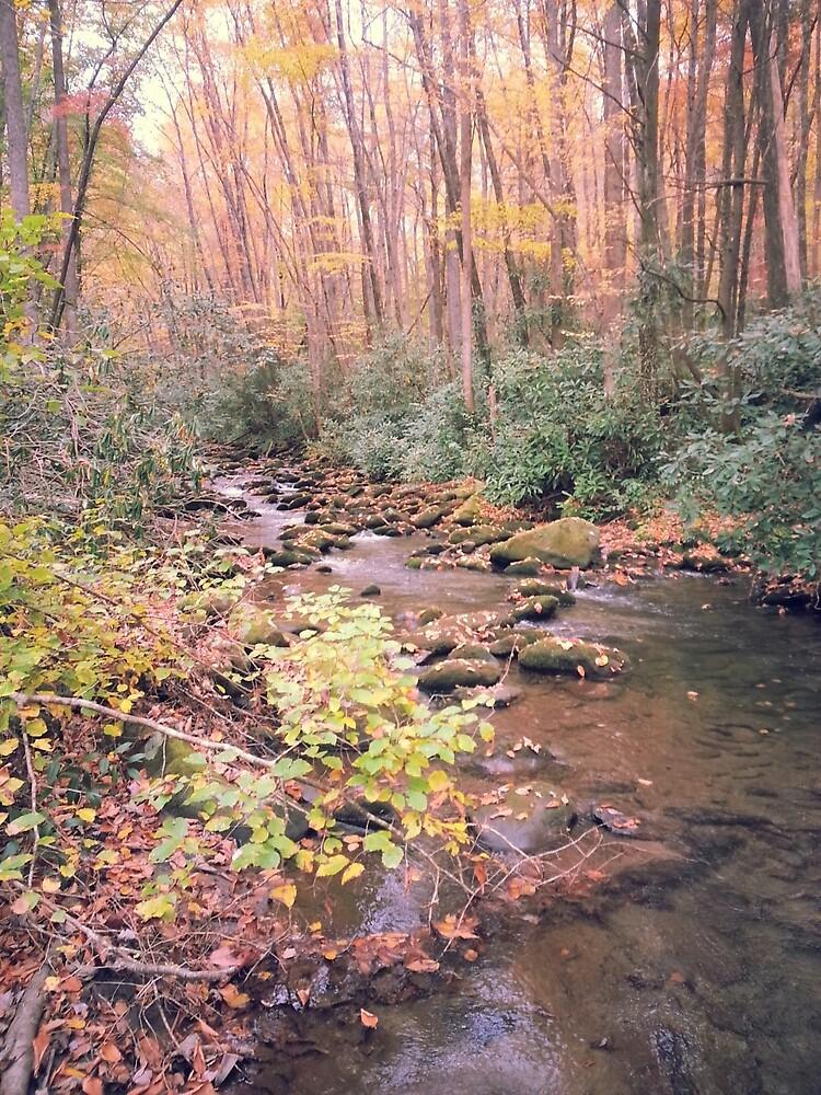Peaceful creek by Caitlin Wilson
