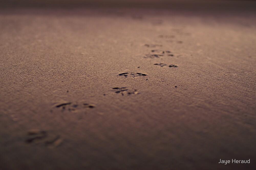 I Will Follow You into the Dark by Jaye Heraud