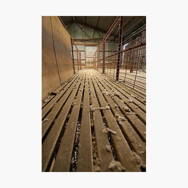 Shearing Shed  Photographic Print