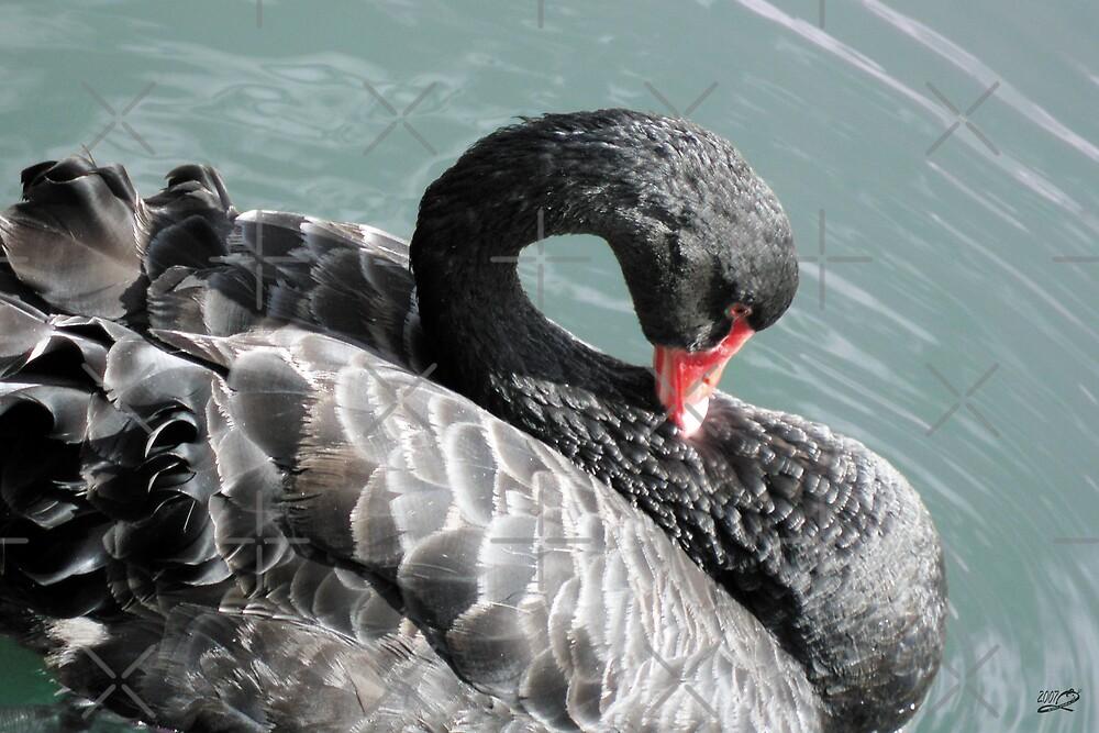 Swan Lake Solo by georgiegirl