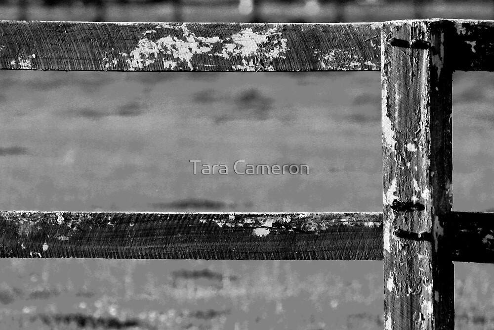 The Fence by Tara Louise