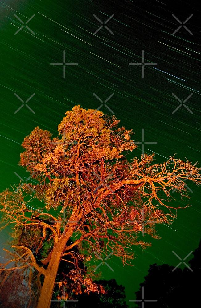 grampian tree by Mik Efford