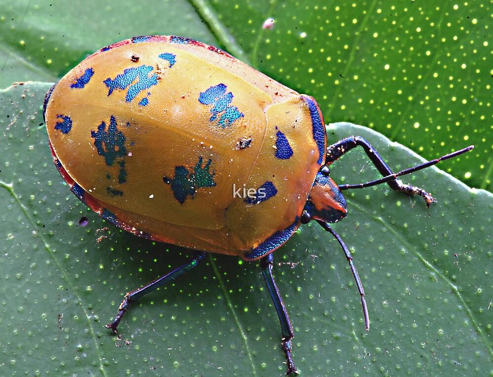 Shield Bug by kies