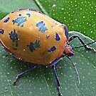 Shield Bug by kies
