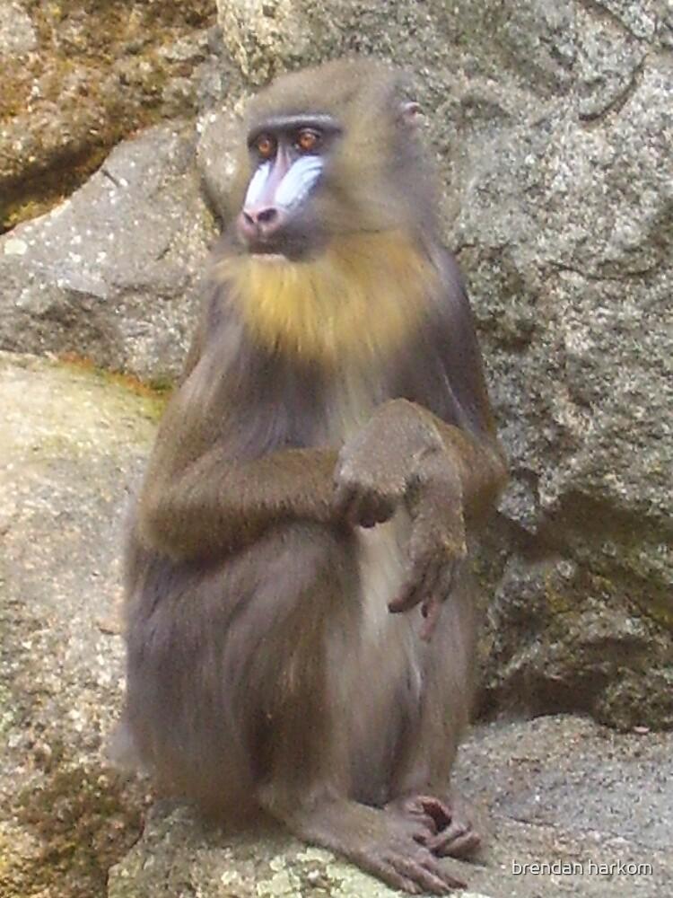 Little Monkey Felllow by brendan harkom