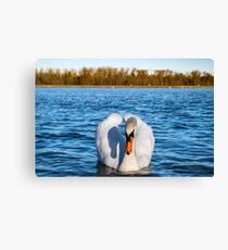 Beautiful white swan on the sun near the river with vivid blue water, natural wildlife Canvas Print