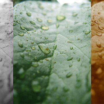 Four Seasons by 3rdEyeOpen