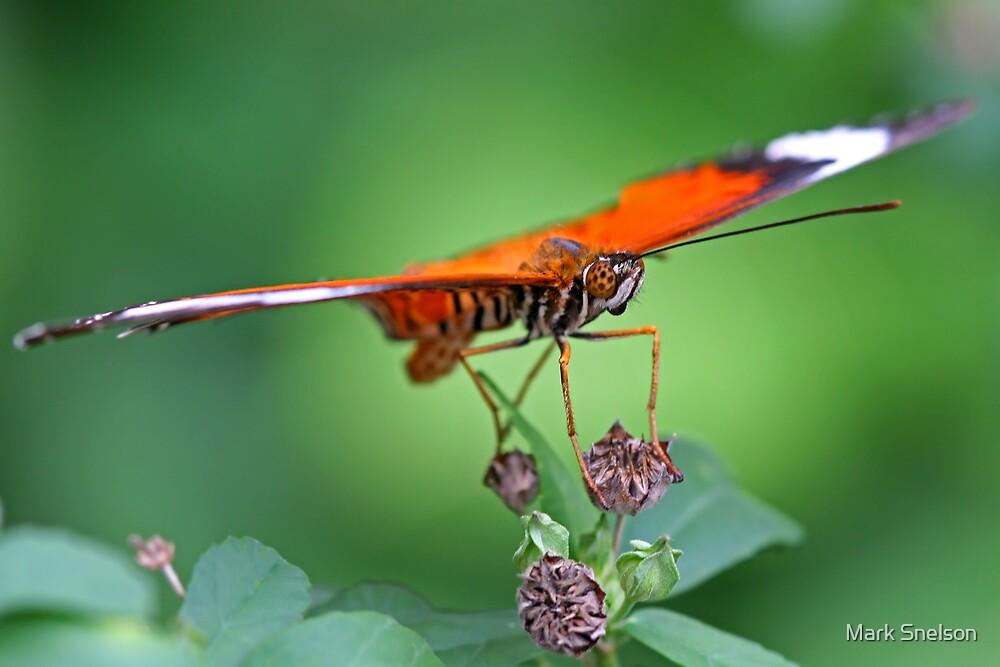 Orange Butterfly 1 by Mark Snelson