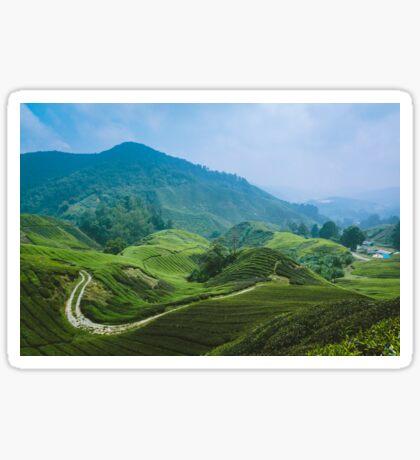 Tea Plantation, Malaysia. Sticker