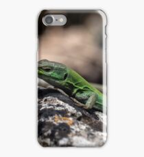 Sicilian Wall Lizard iPhone Case/Skin