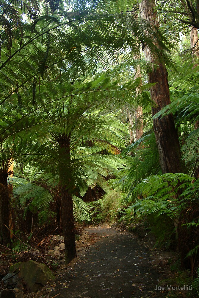 Tree Ferns, Otway Ranges by Joe Mortelliti
