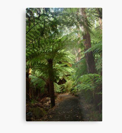 Tree Ferns, Otway Ranges Metal Print
