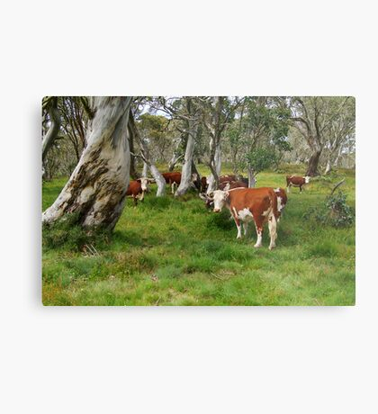 Mountain Cattle, Victorian High Country Metal Print