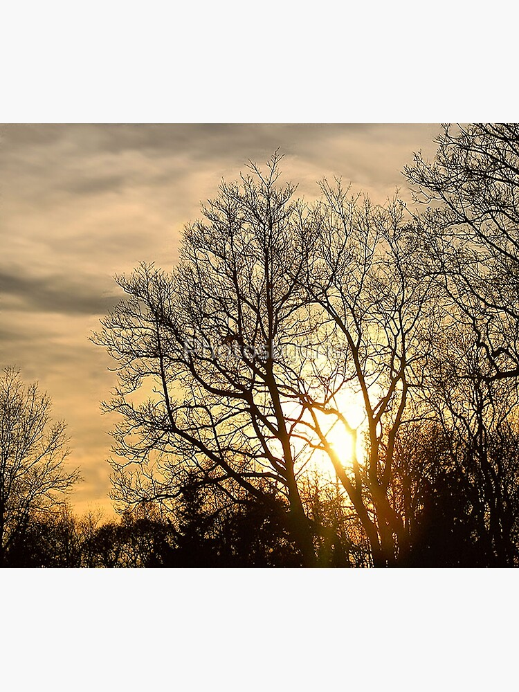 Tree in Golden Hour by PhotosbyCris