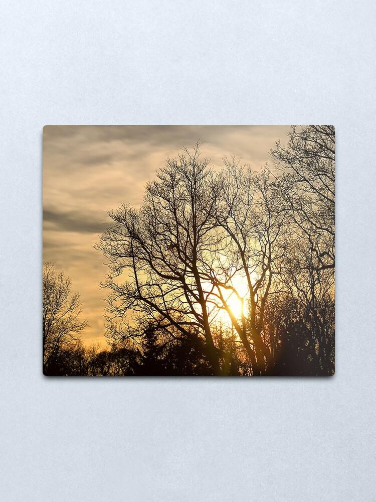 Alternate view of Tree in Golden Hour Metal Print