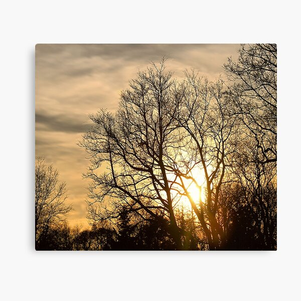 Tree in Golden Hour Canvas Print