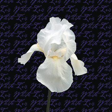 White Iris by lushmint