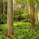Ferns,Haunted Stream High Country by Joe Mortelliti