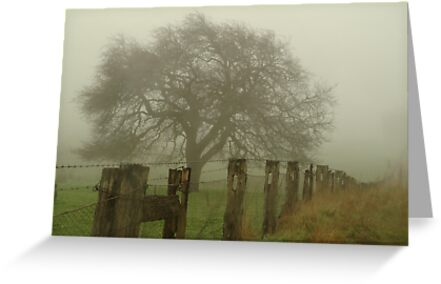 Foggy Morning, Macedon Ranges by Joe Mortelliti