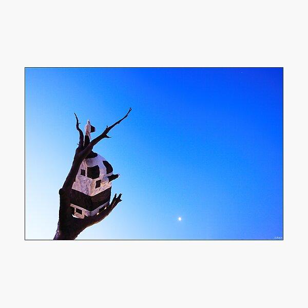 Under The Moonlight Photographic Print