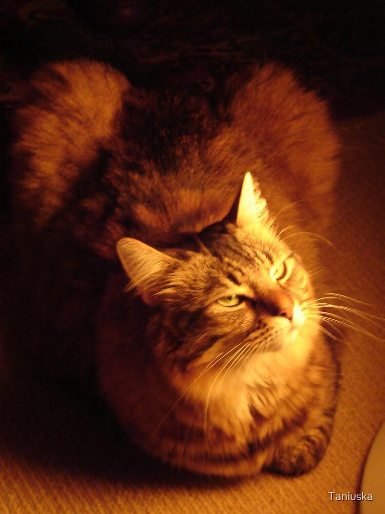 Mystical Cat by Taniuska