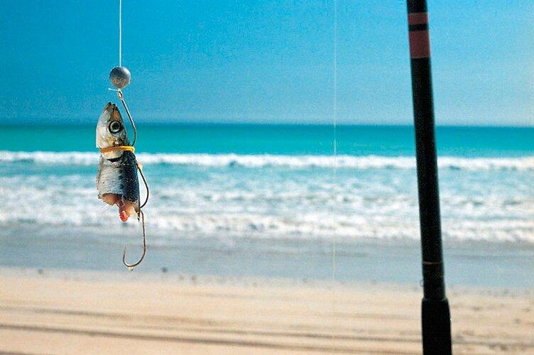 Pilchard, Cable Beach W.A by Jason Kimberley