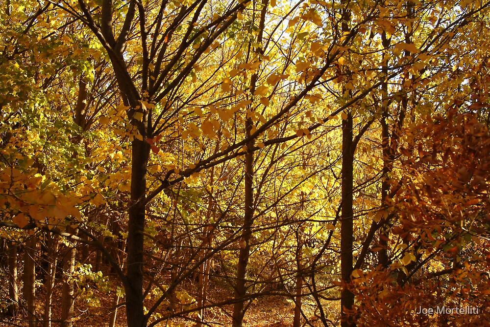 Autumn at Clunes by Joe Mortelliti