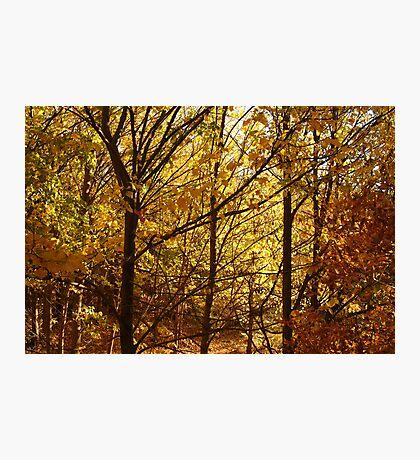 Autumn at Clunes Photographic Print