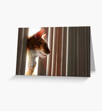 Roxy Peeking Through the Blinds Greeting Card
