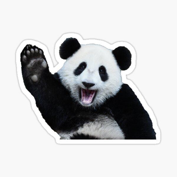 bebé panda Pegatina