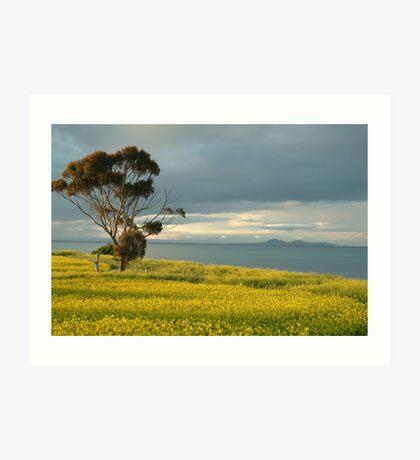 Golden Fields, Bellarine Peninsula Art Print