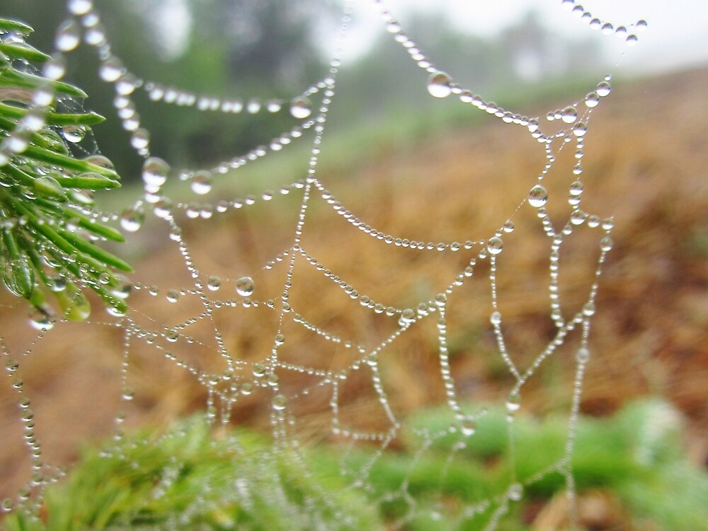 Spangled Spiderweb by everpresent
