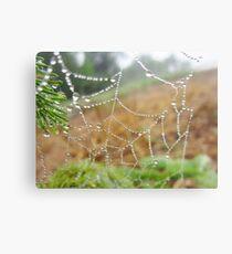 Spangled Spiderweb Metal Print