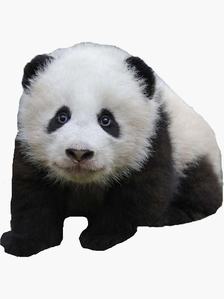 Pandajunges von jackiekeating