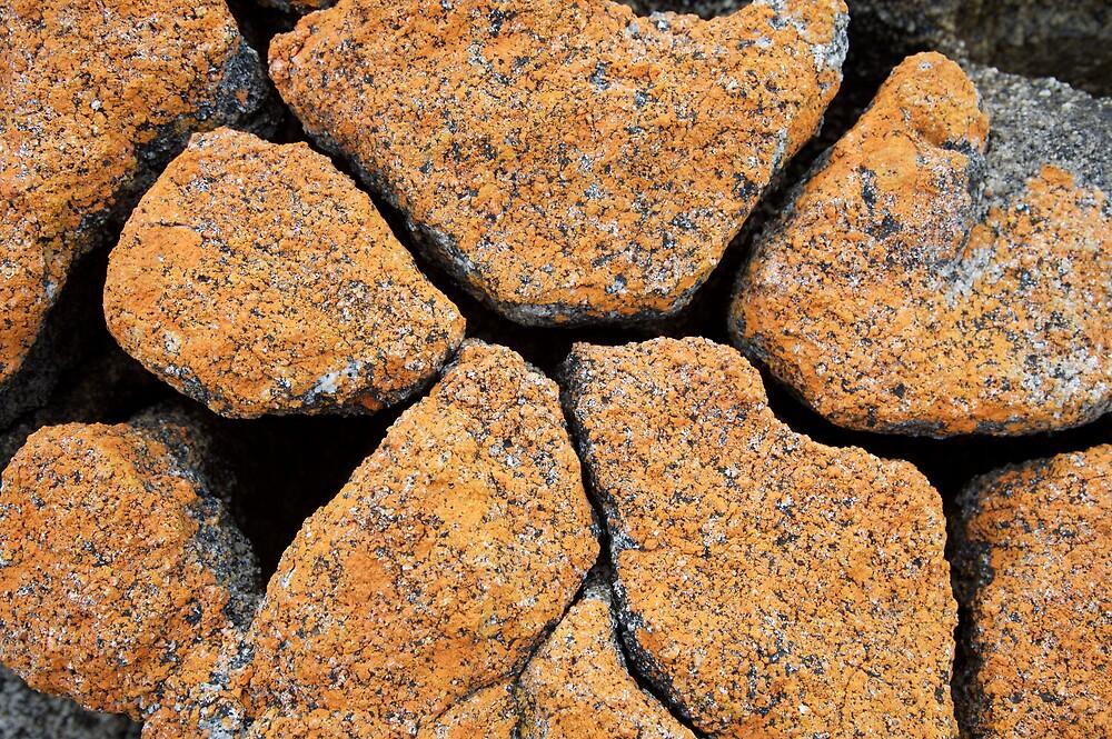 Lichen by Mark Williamson